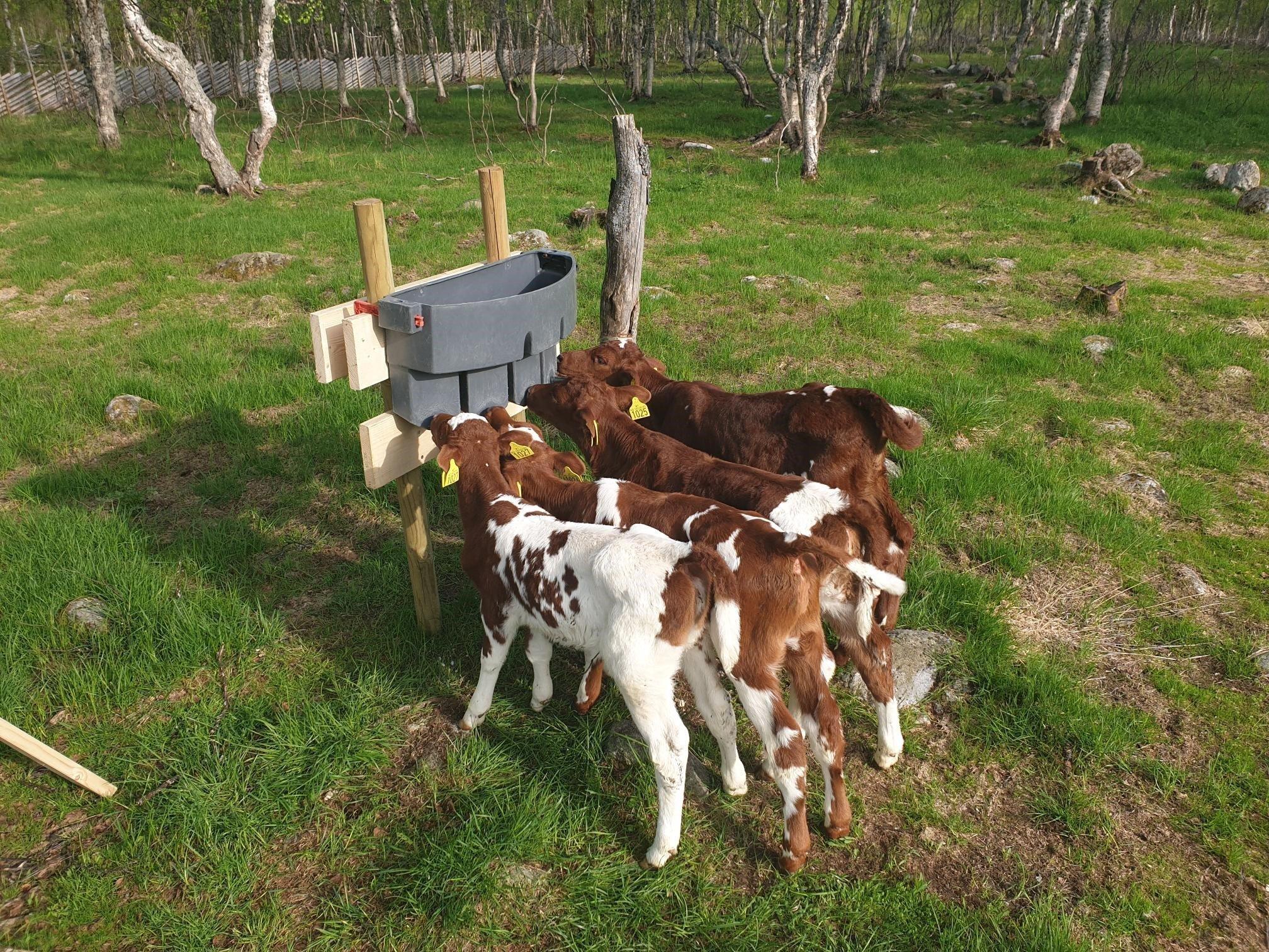 Kalvene er i parken!
